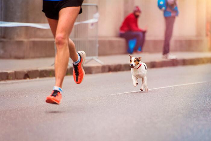 Corrida com cachorro